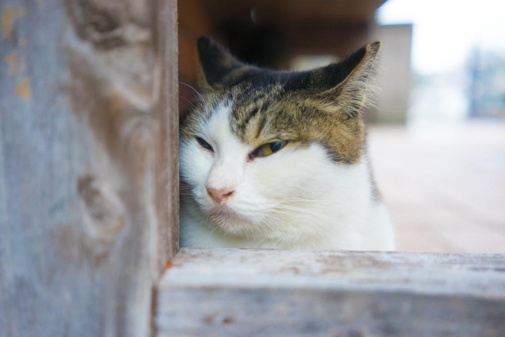 背景がボケた猫