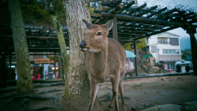 ノスタルジックな鹿